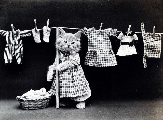 kočka a oblečení