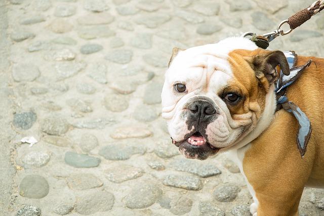 Dôvody, prečo váš pes vyvrhuje žlč