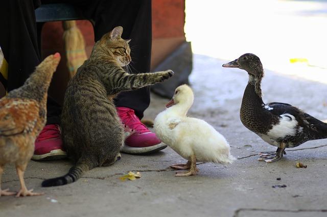 kočička s housatama