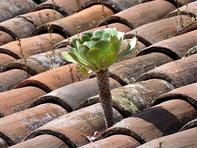Zelené strechy, alebo ako využiť každý centimeter štvorcový